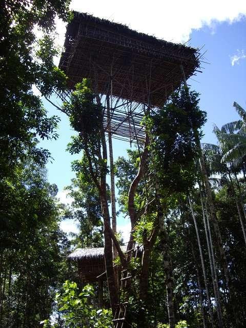 Mengenal Suku Korowai di Selatan Papua