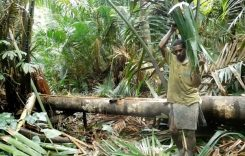 25 Film Dokumenter Siap Bertarung di FFP 2017 di Merauke Papua