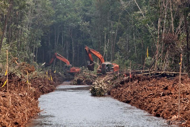 Ketegasan Pemerintah Nasonal Dalam Mengimplementasikan  Sikap Komitmen Pemulihan Gambut Di Lanskap Papua
