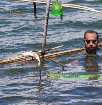 "Salah satu pemudah Adat di Kampung Hebhaebulu Yoka yang sedang memanen ikan di Bhukere menggunakan Alat Tradisional Asli Suku Sentani ""Khonim Alona ""' ( Foto : Nesta Makuba )"