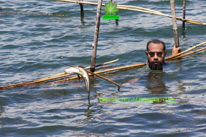 Salah satu pemudah Adat di Kampung Hebhaebulu Yoka yang sedang memanen ikan di Bhukere menggunakan Alat Tradisional Asli Suku Sentani
