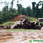 Aktifitas Penebangan Kayu di Hutan Papua ( Foto Dukumentasi Jerat Papua)