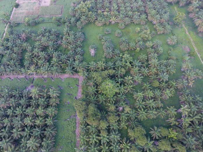 Perluasan Hutan Sawit di Tanah Papua , yang banyak terjadi Persoalan Ijin HGU