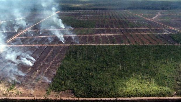 kebakaran-hutan- yang di jadikan lahan Baru Perkebunan Kelapa Sawit di Papua, Ist